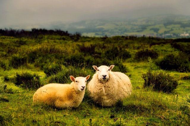 Austauschjahr Irland